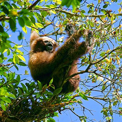 【寒假】 火山地热制伞造纸;雨林徒步观鸟寻找长臂猿--腾冲+高黎山考察之旅