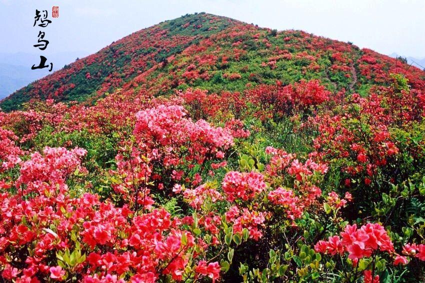 【周末营】探寻春天的脚步、赏漫山映山红、眺望杭州美丽山川——徒步余杭鸬鸟山
