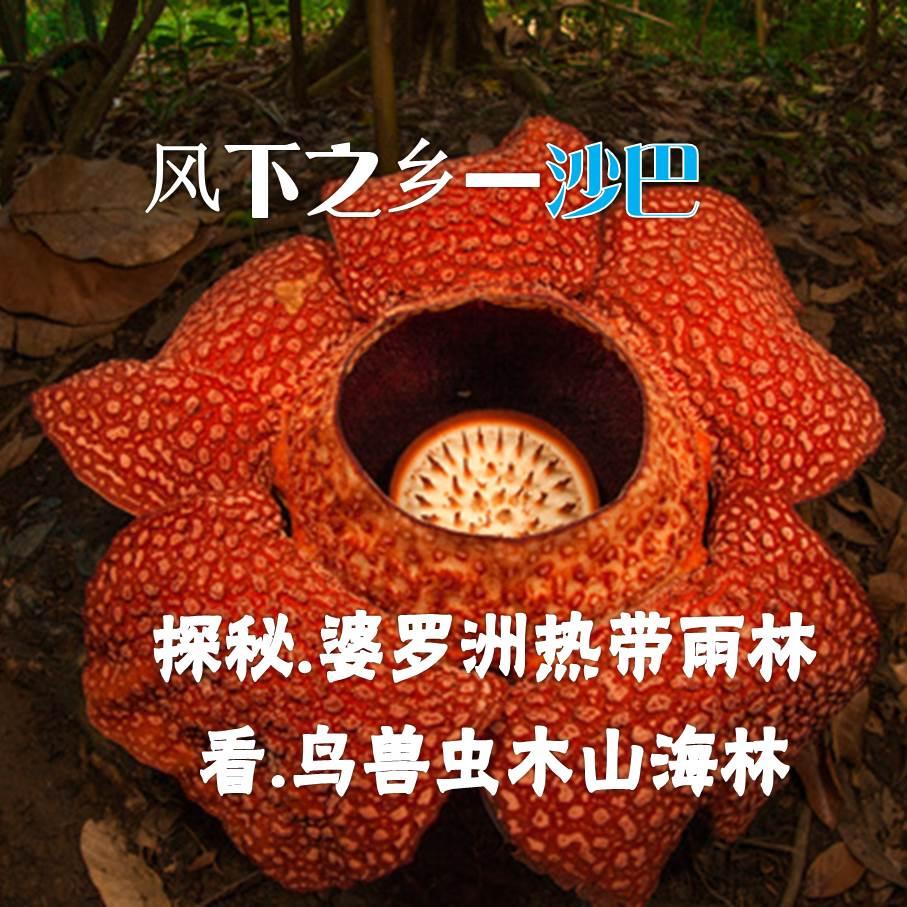 【寒假&春节】(0127团付款中)探秘热带雨林·观赏鸟兽虫木— —风下之乡,沙巴自然探索营
