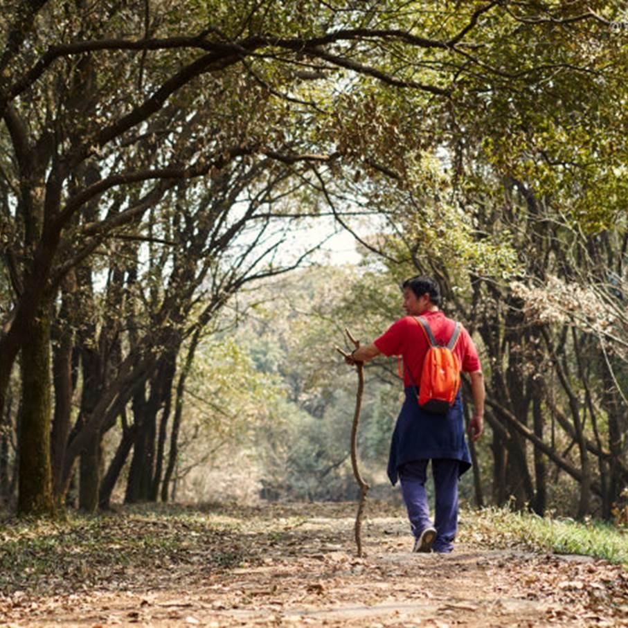 【周末一日】(可单飞)徒步无锡经典之线--军嶂古道,体验一次丛林探险记