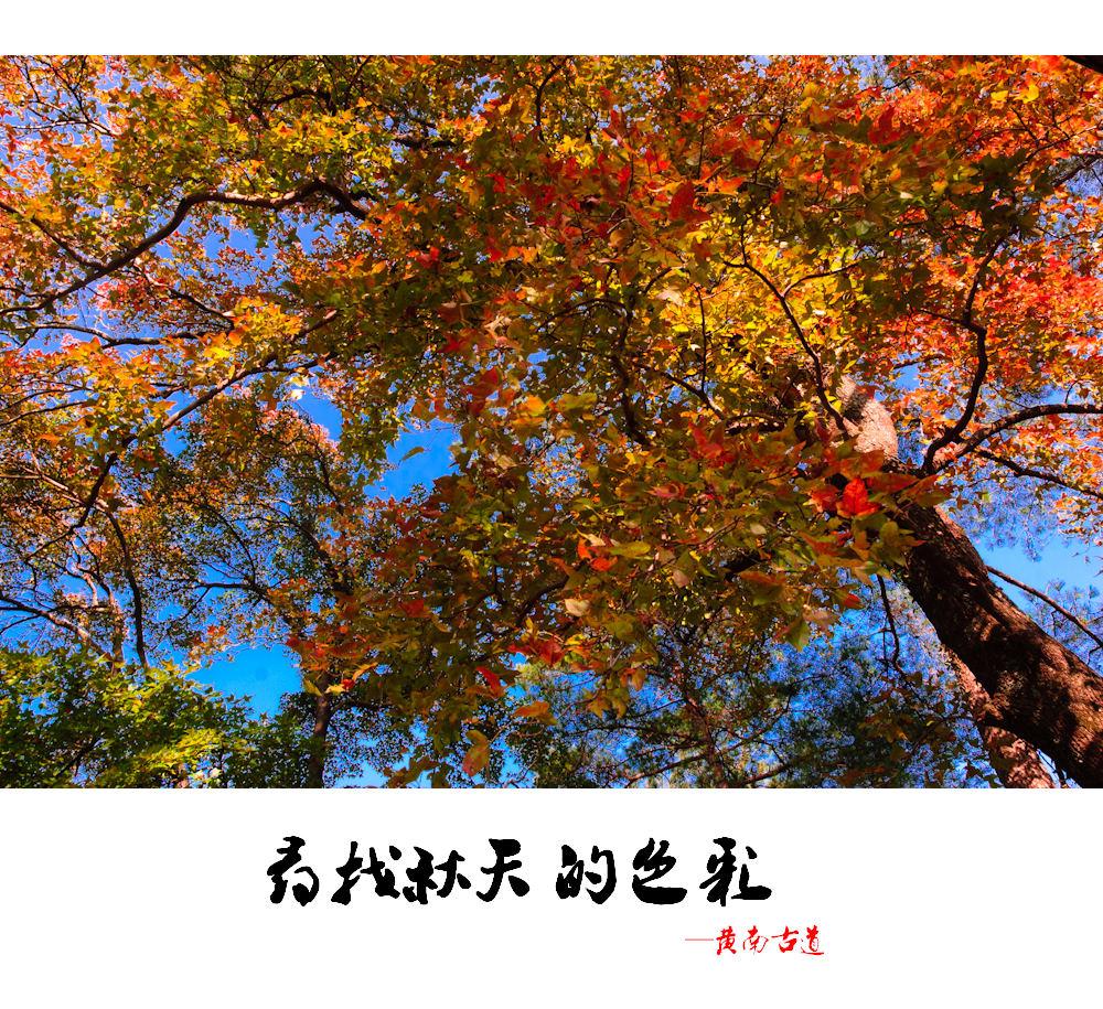 【两日营】徒步黄南古道、重走唐诗之路,赏天台山水——最美金秋,趣。天台