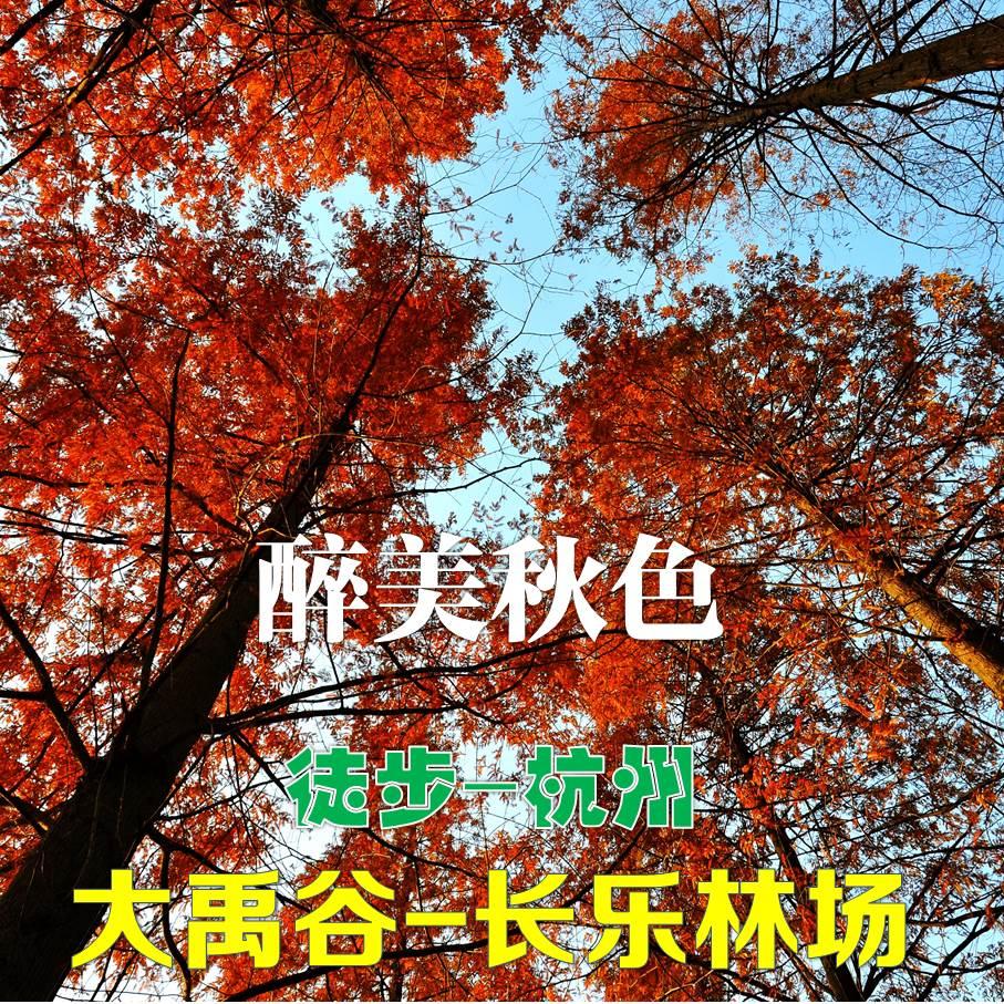 【周末一日】(可单飞)杭州娘娘山-大禹谷-长乐林场——最美秋色之杭州赏秋