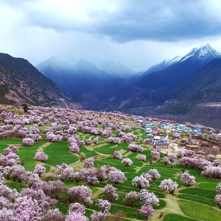 【清明】(成行)我为桃花狂—赶往神的自留地—西藏+林芝赏花之旅
