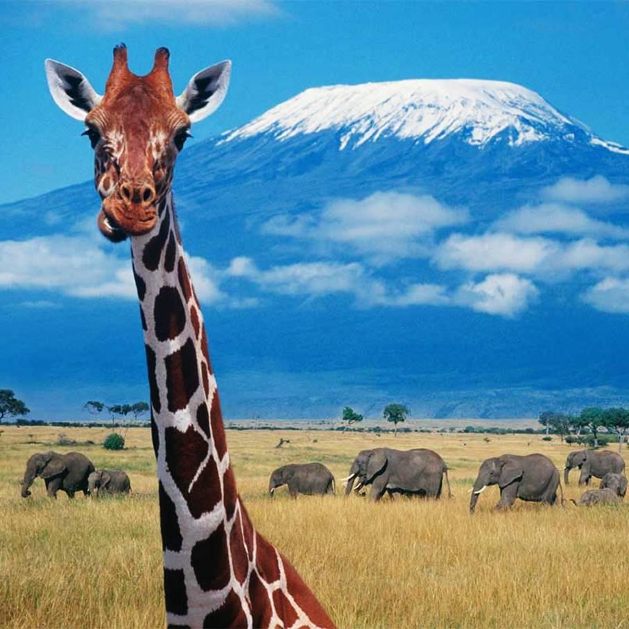 【暑假】狂野之旅,动物大迁徙的狂欢盛筵——趣。肯尼亚(共三期)