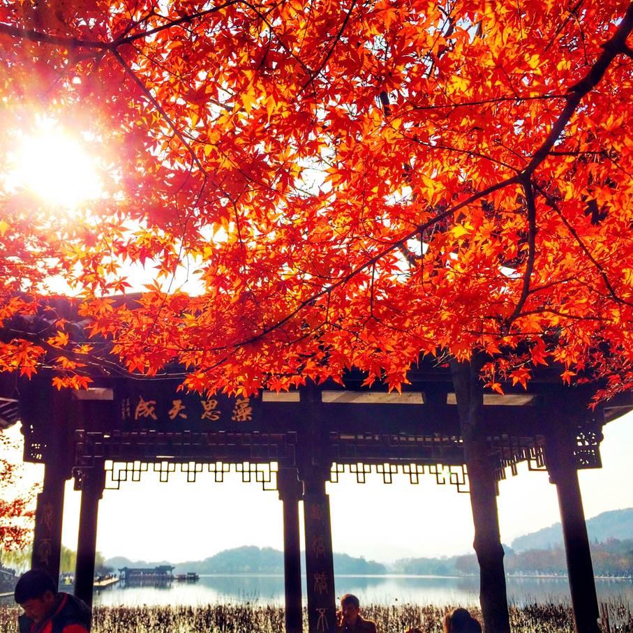 【周末营】醉美金秋、山脊行走、徒步杭州之——九溪烟树—十里锒铛—云溪竹径