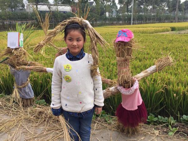 【周末一日】(可单飞)水稻收割、手工脱粒、稻谷生态瓶、稻草人制作、参观奶牛场、猕猴桃采摘、赏枫叶、逛廊下郊野公园
