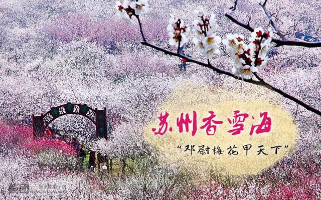 【春天花事】赏梅-光福香雪海,徒步-苏州灵白线——趣。苏州