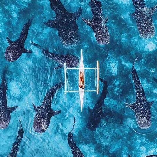 【寒假&春节】与鲸鲨共舞、寻找沙丁鱼风暴、资生堂岛+处女岛浮潜、薄荷岛(眼镜猴+巧克力山+越野车+夜观萤火虫)—菲律宾宿务+薄荷双岛之旅