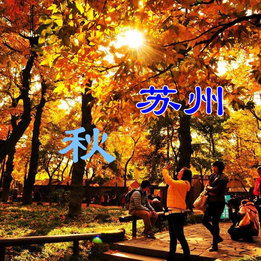 【周末一日】(1207、08团均已成行)姑苏城灵岩山徒步,天平山探银杏赏红枫—趣苏州