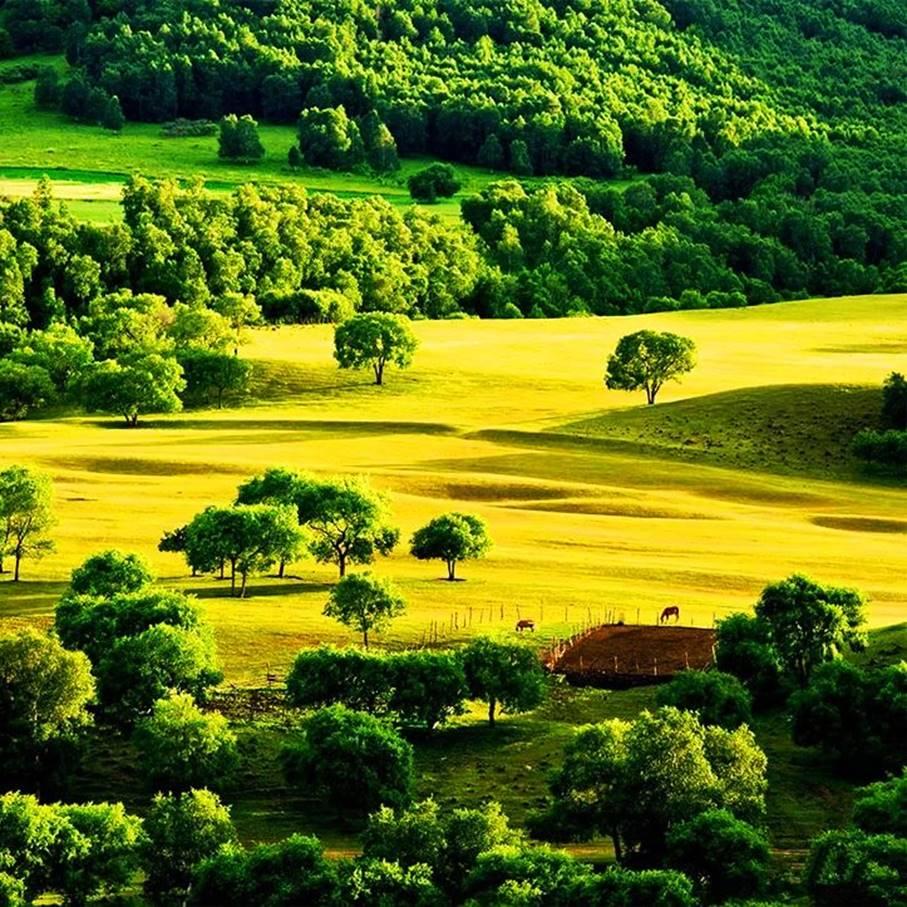 【暑假】(六期皆满员)走长城,看草原,星空下的七彩森林,坝上草原研学之旅