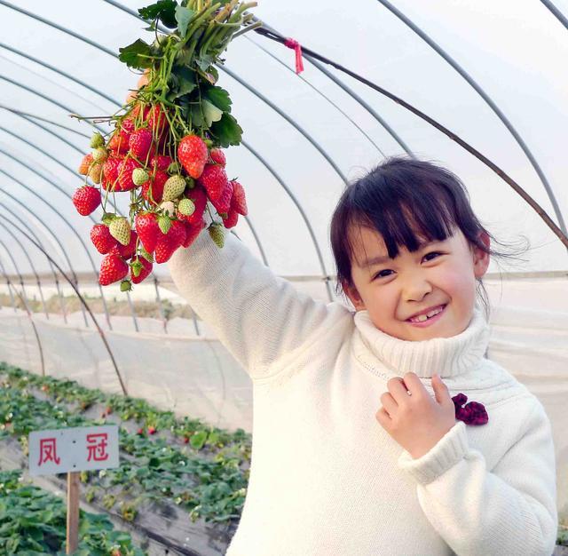 【元旦.一日】(可单飞)紫金庵看天下罗汉、太湖东山徒步穿越、悠然自得摘草莓—趣。苏州