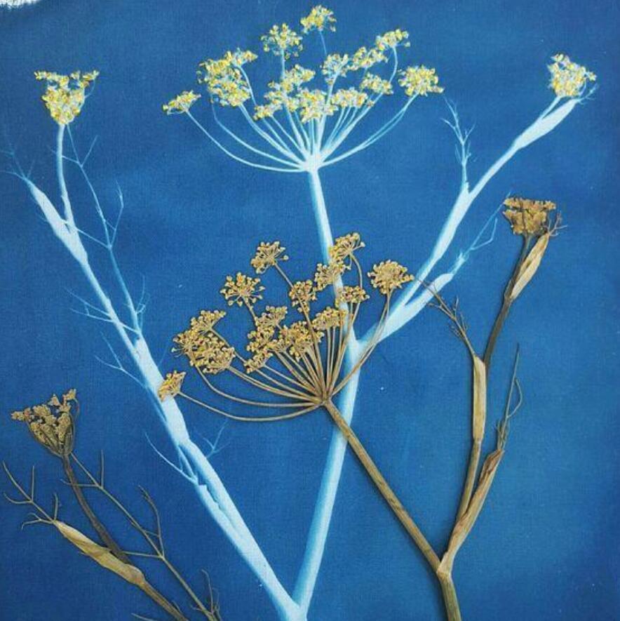 【一日营独立营】捕捉自然之美蓝晒、自然手作夏日风铃、布袋花草拓印—来一场蓝与青的奇妙旅行