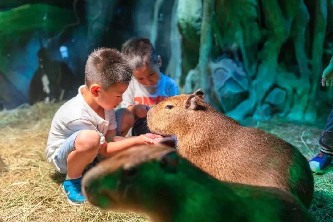 【趣科普】(1031余位6、新增1107)神奇的动物在哪里 夜探萌宠动物园