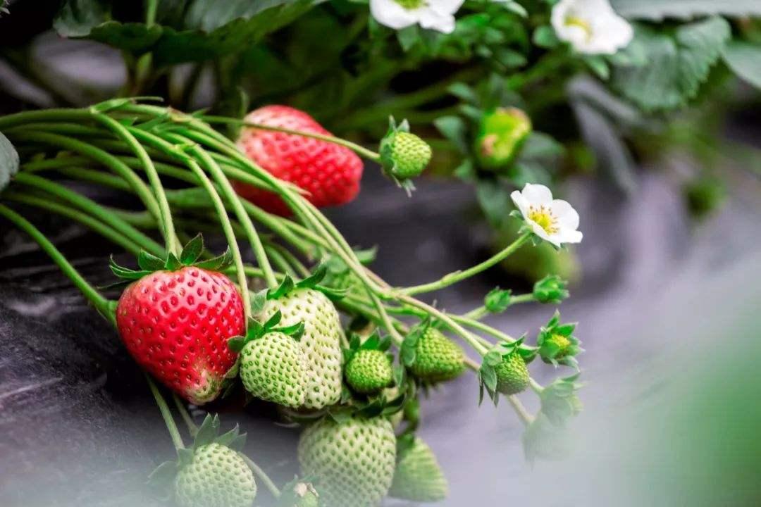 【元旦-上海一日】摘草莓、寻古崧泽遗址、青西郊野公、入门观鸟体验、给小鸟做鸟窝—趣。青浦B线